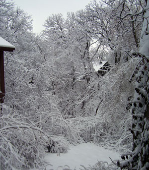 2007 Ice Storm