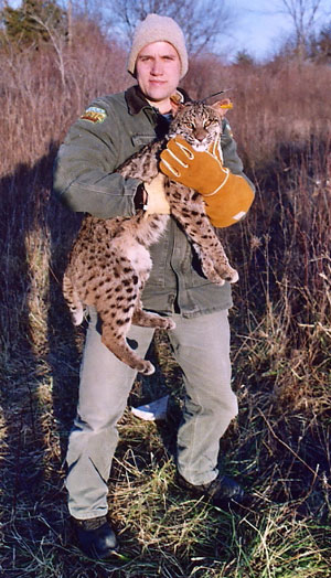 DNR officer holding bobcat