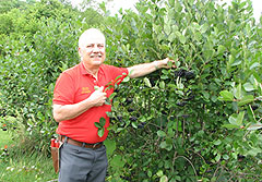 Eldon Everhart with aronia berries