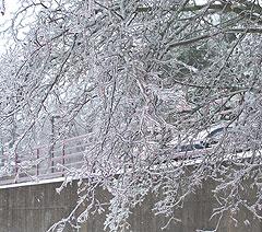 Ice covers tree