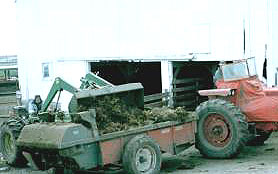 Tractor loads manure onto spreader