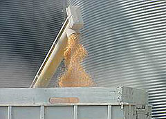 Corn being emptied from bin.