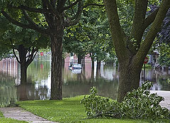 Trees in floodwater in Cedar Rapids