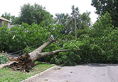 Tree down in Des Moines.