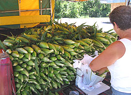 Paulette Bandwk sacks up sweetcorn from truck.