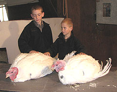 Colin and Conner Hill with turkeys that'll go to the White House.