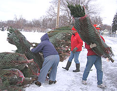 Iowa Christmas trees ready for deliivery to troops.