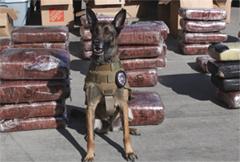 Cedar Rapids police dog Marco.