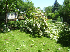 Hundreds of trees and tree limbs were blown down by the weekend storm.