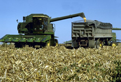 Harvesting-corn (file photo)