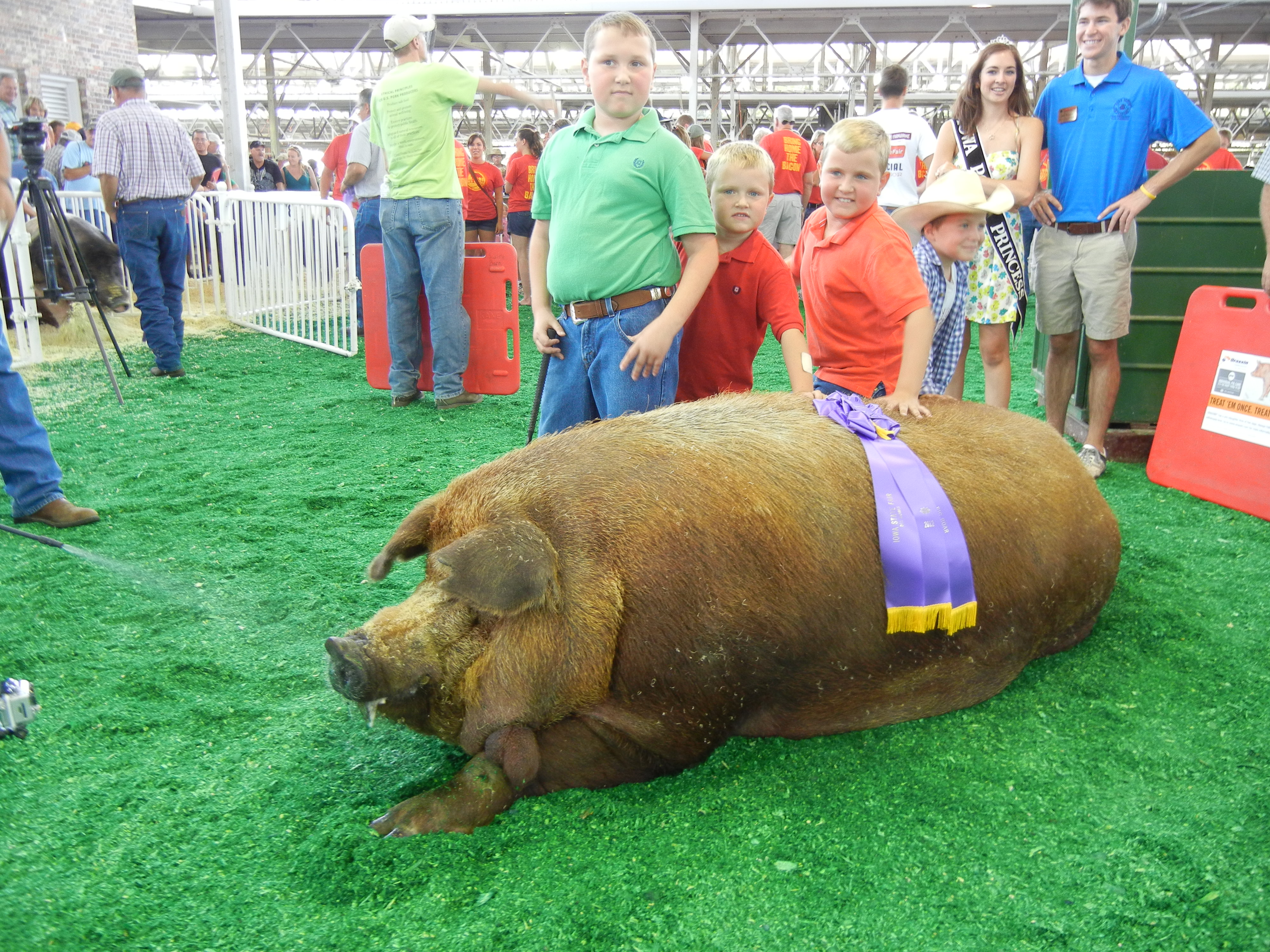 Reggie  sets new record for The Biggest Pig In The World Record