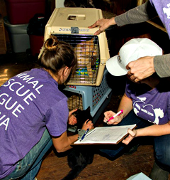 Workers prepare to transport cats to ARL shelter.