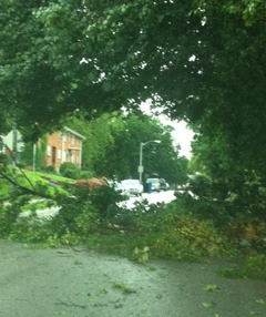 Storms this morning damaged trees in Omaha.