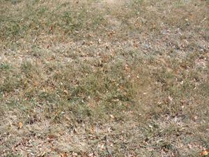 Grass-002