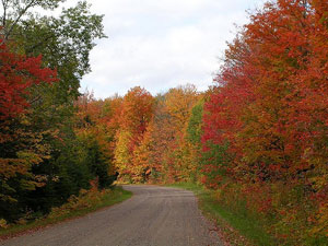 Fall-color