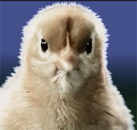 Chick featured in Bruce Braley ad.