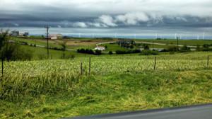 Crops flattened by a storm near Adair.