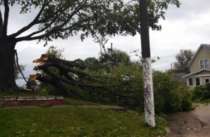 A downed tree.