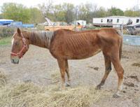 FC-horse-2