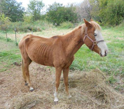 Horse found by Fayette County deputies.