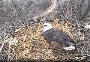 View from the Decorah eagle cam.