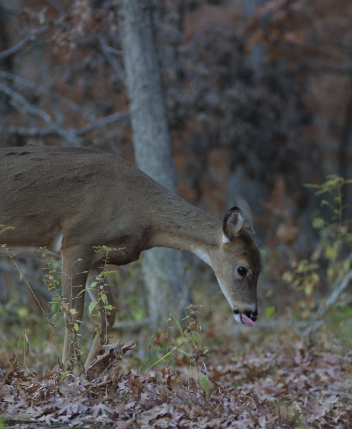 singles in deer Find out how sexy red deer can be if you think you have seen all that red deer has to offer,  red deer singles 44 years old single woman looking for men.