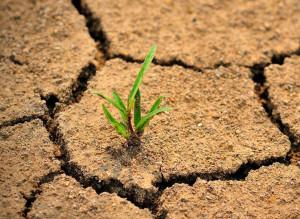 Drought-plant