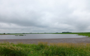 Water flooding a Green County farm field.