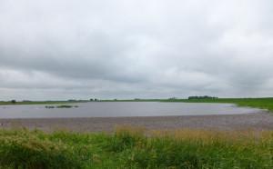 Water flooding a Green County farm field.