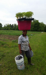 Jacqueline carries plants to the field.