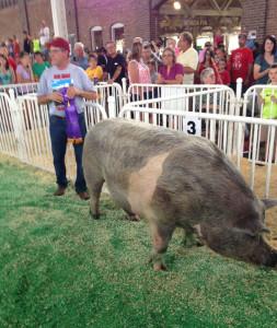 Big Mac won the big boar contest at the Iowa State Fair.
