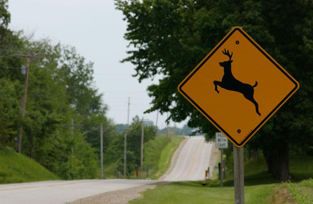 Deer Xing Sign