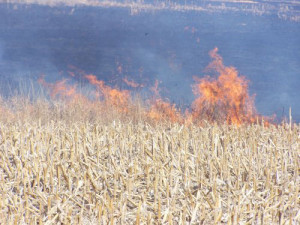 Fire in a cornfield.
