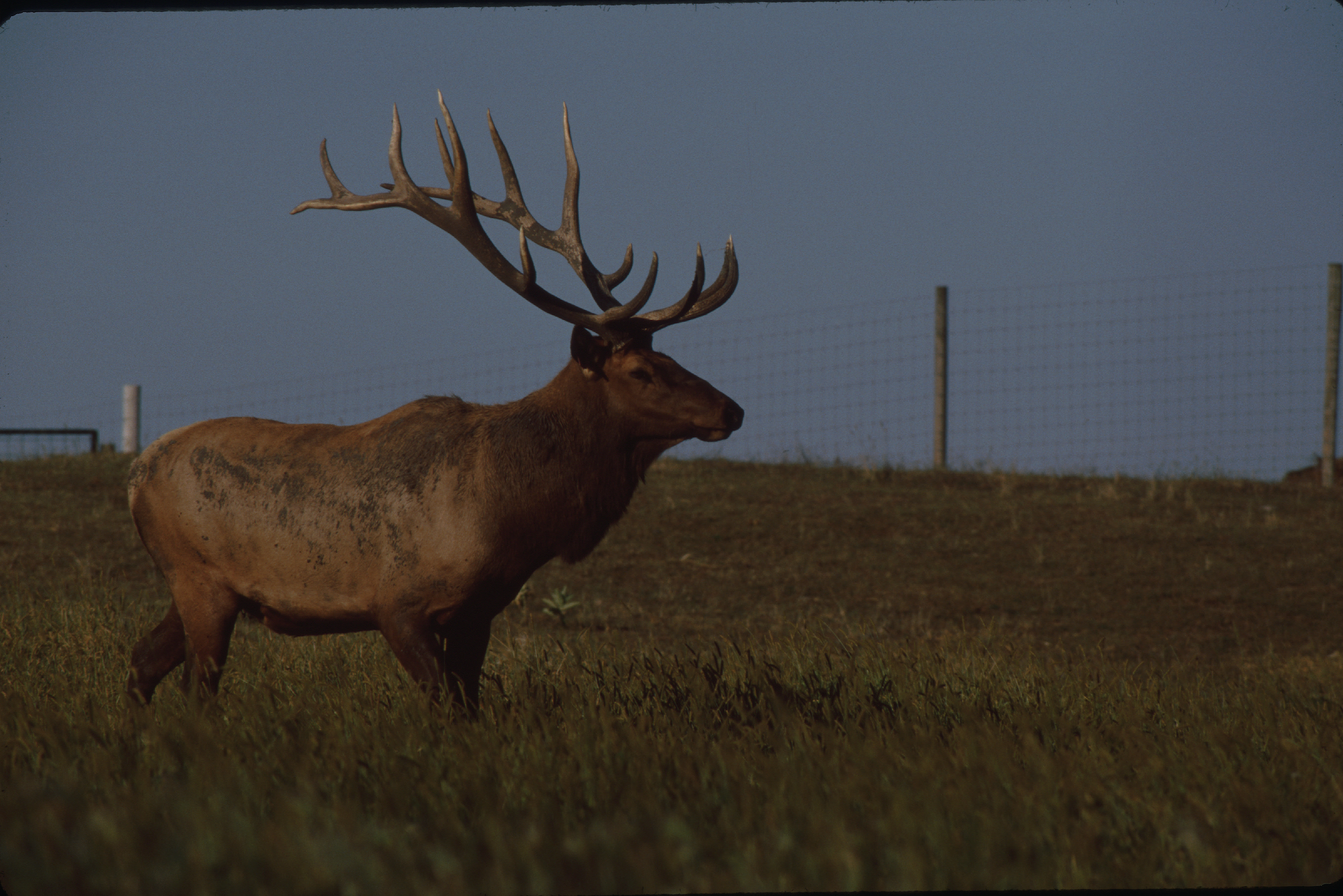 Dnr orders shooting of elk in monona county for Iowa fishing license cost