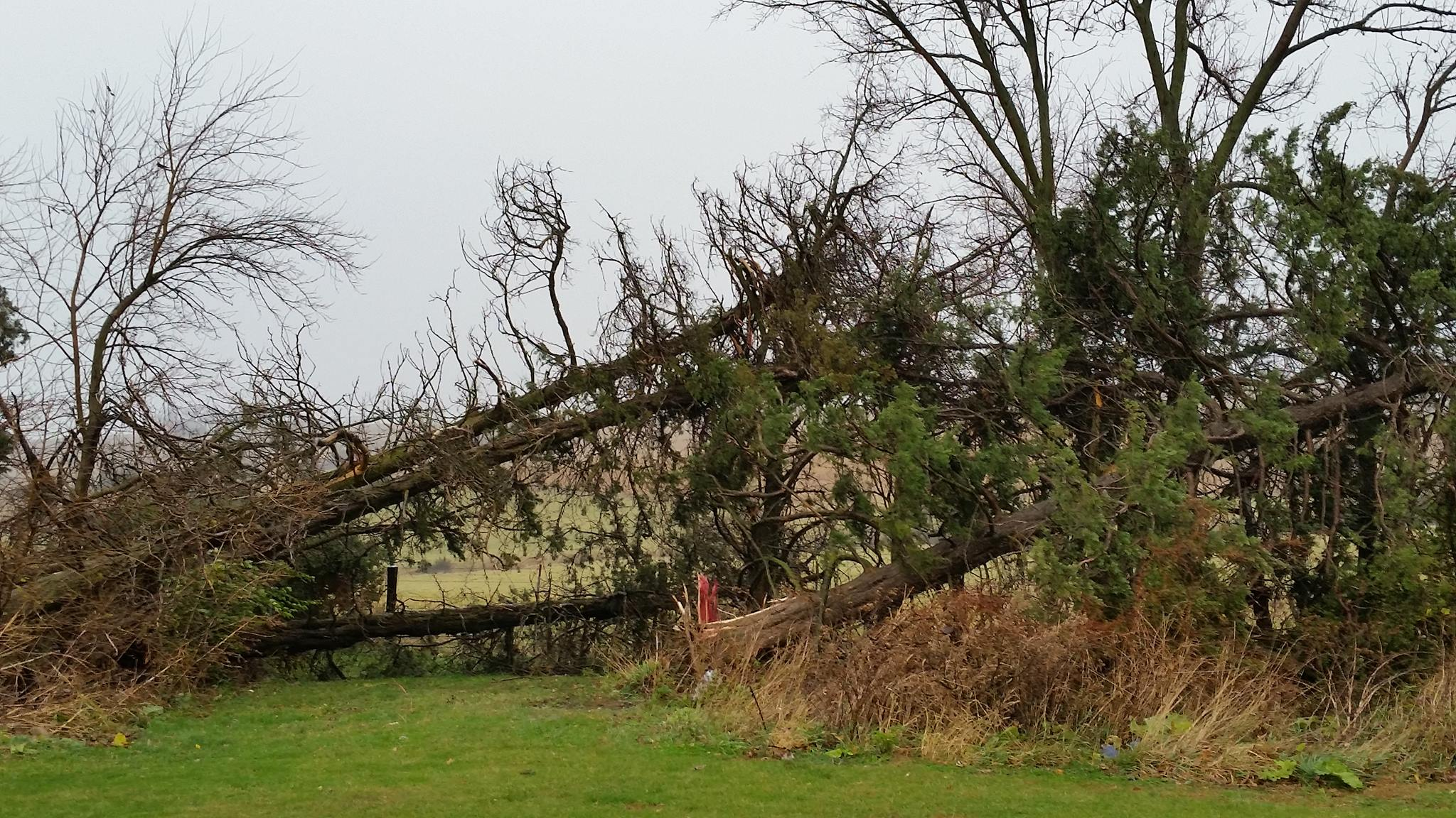 Trees downed near Creston