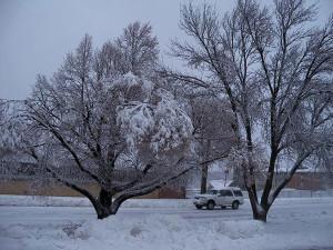 Snow-SUV