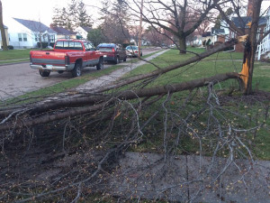 Trees knocked down by heavy winds in Bettendorf.