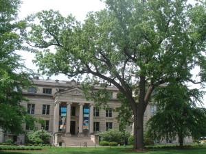 U-I's historic black walnut tree.