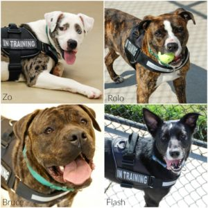 "Dogs selected for ""Pets for Vets"" program"