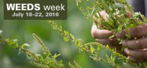 Weeds-Week
