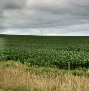 A cornfield in eastern Iowa.