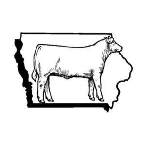 iowa-cattle