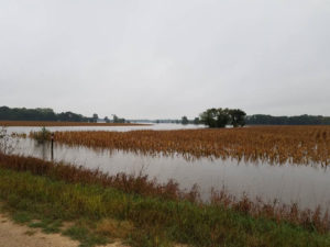Corn in floodwater on Brad Ruth's farm.