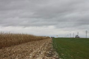 The DOT pays farmers to leave some corn standing to block blowing snow.