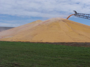 Grain pile at the Farmers Cooperative Society in Sioux Center.