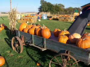 pumpkin-farm-klem-oct-2016