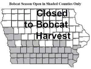 bobcat-season