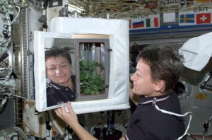 Peggy Whitson checks on the soybean experiment aboard the space station in 2002.