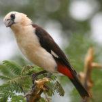 Omaha zoo opens interactive bird program
