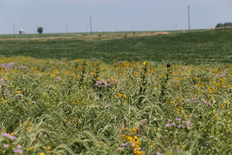 Research Finds Small Prairie Strips Help Cut Water